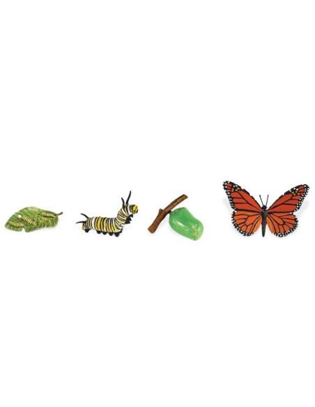 Cykl życia motyla