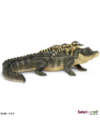 Aligator z młodymi