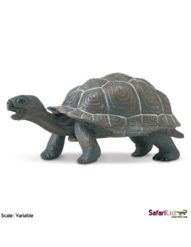 Młode żółwia słoniowego