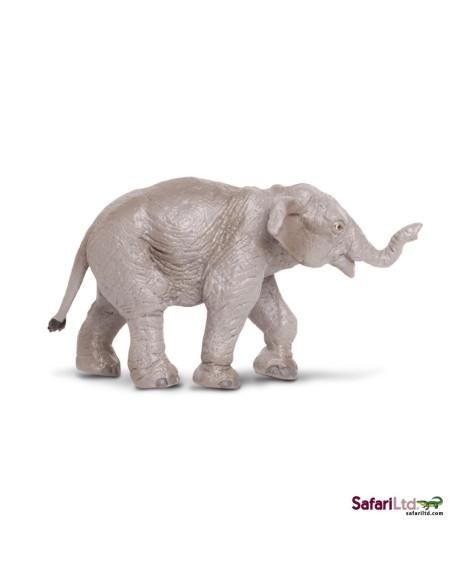 Młode słonia indyjskiego