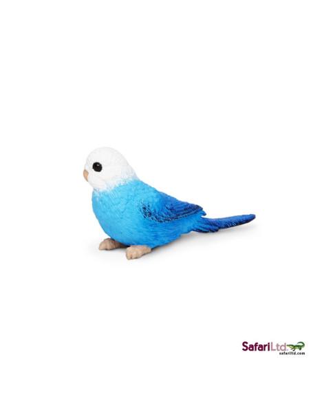 Papużka falista niebieska