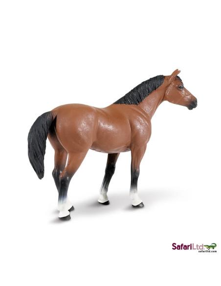 Koń rasy Quarter Horse