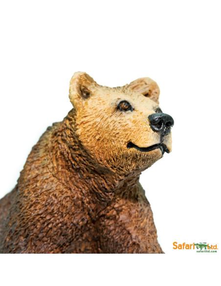 Niedźwiedź Grizzly młody