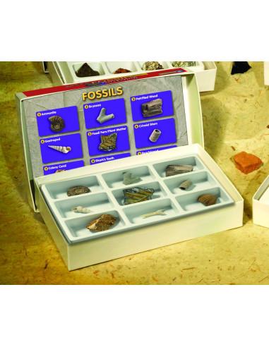 Kolekcja skamieniałości