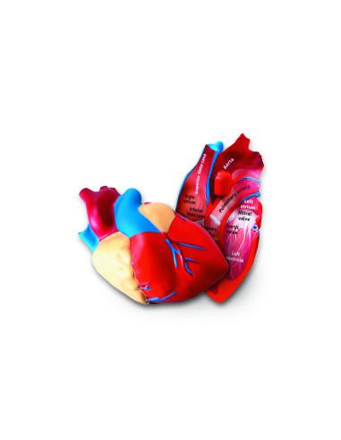 Model serca z pianki