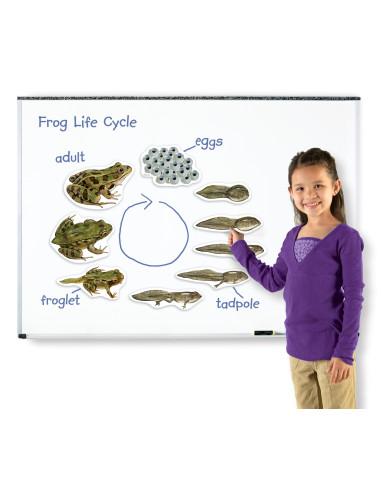 Cykl życia żaby - magnetyczny