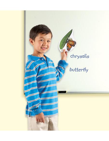 Cykl życia motyla - magnetyczny