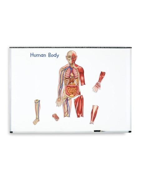 Odwracalne magnetyczne Ciało