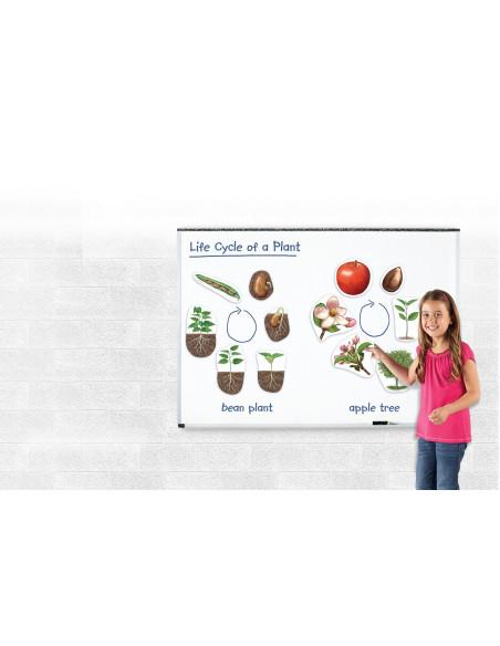Cykl życia rośliny - magnetyczny