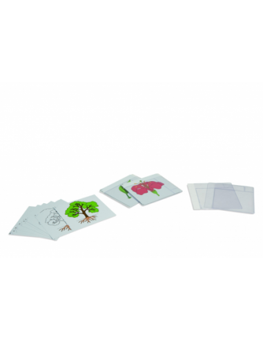Nienhuis - Karty botaniczne - zestaw I