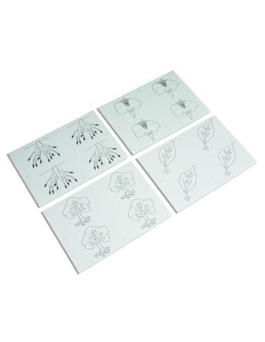 Nienhuis - Puzzle botaniczne, karty pracy do kopiowania