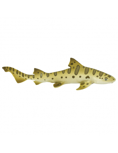 Rekin leopardzi
