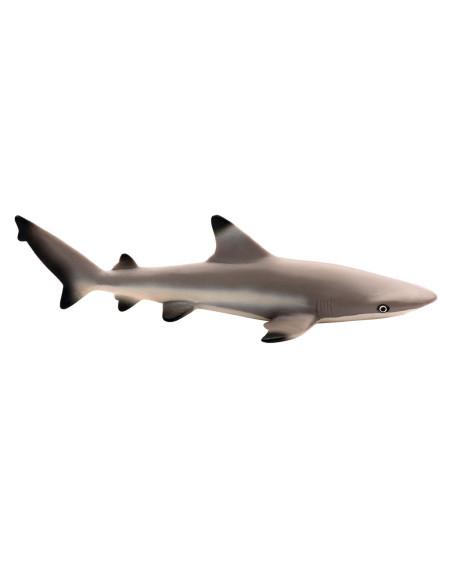 Żarłacz (Carcharhinus melanopterus)