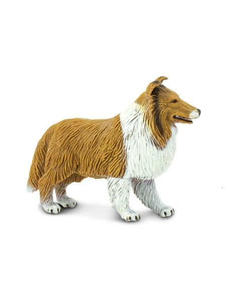 Owczarek szkocki długowłosy - Collie