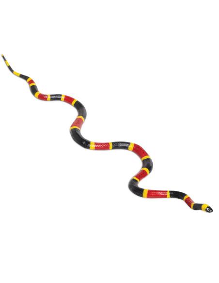 Wąż koralowy arlekin