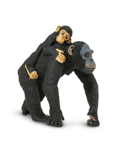 Szympans z młodym