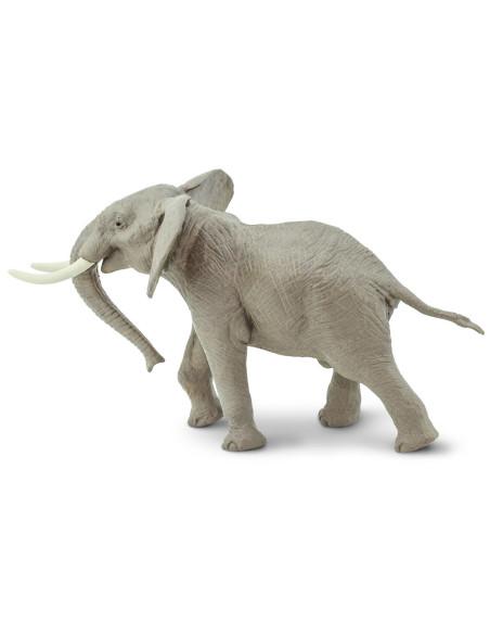 Samiec słonia afrykańskiego
