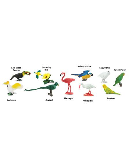 Rurka - Ptaki egzotycne