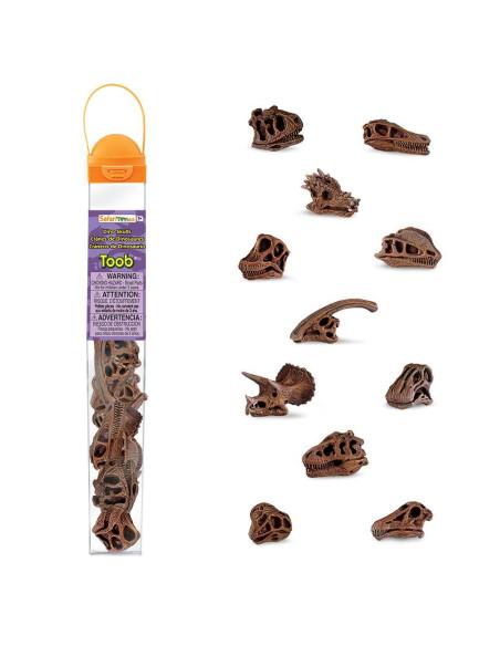 Tuba - Czaszki dinozaurów