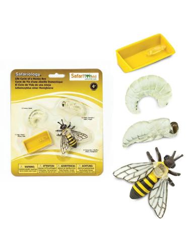 Cykl życia pszczoły