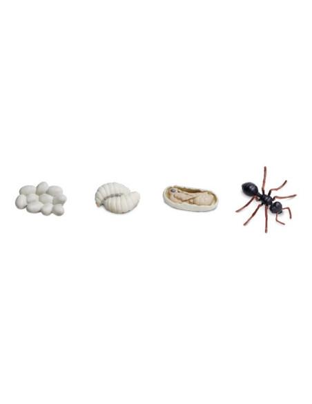Cykl życia mrówki