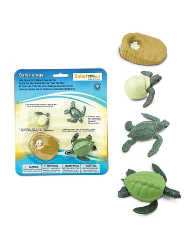 Cykl życia żółwia morskiego