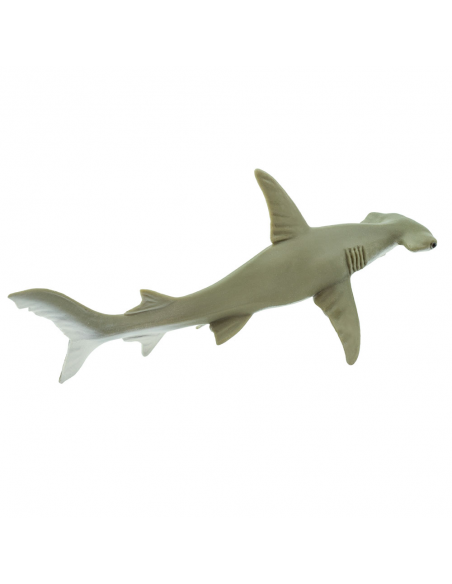 Rekin młot