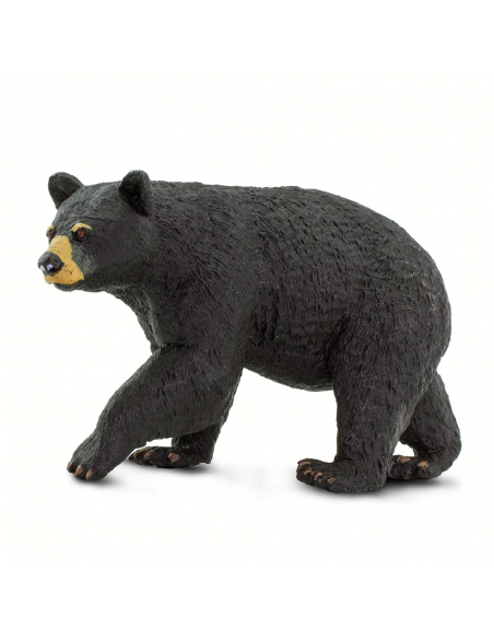 Niedźwiedź czarny