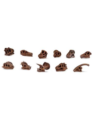 Czaszki dinozaurów
