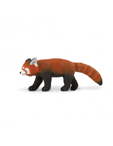 Panda czerwona